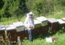 Rade Marjanovic na svom pcelinjaku u Dubravama