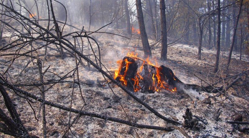 Шумски пожари у НП Тара